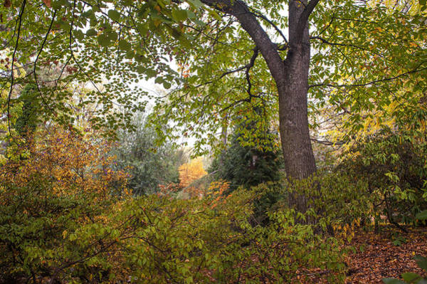 Photograph - Secret Garden In Fall Time 11 by Jenny Rainbow