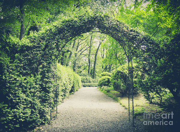 Magic Wall Art - Photograph - Secret Garden In Vintage Style by Lukaszimilena