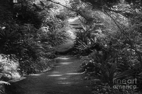 Photograph - Secret Path by Jeni Gray