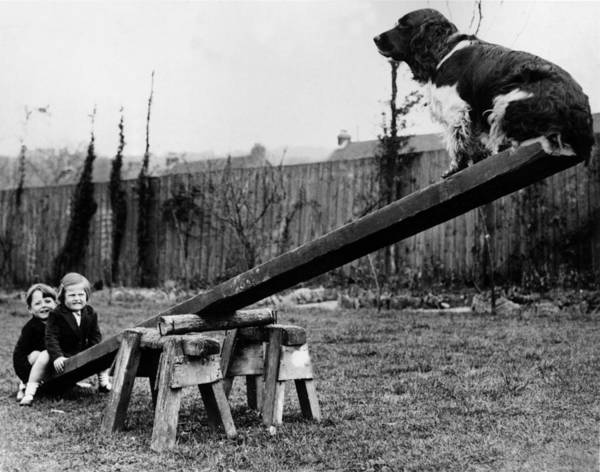 Humor Photograph - See-saw Dog by Fox Photos