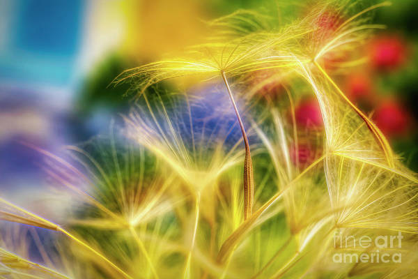 Abstract Impressionism Photograph - Seed 3 by Veikko Suikkanen
