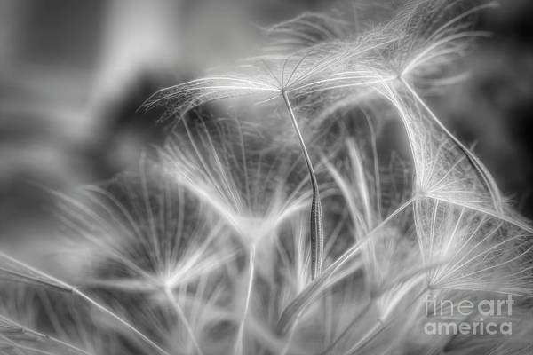 Abstract Impressionism Photograph - Seed 4 by Veikko Suikkanen