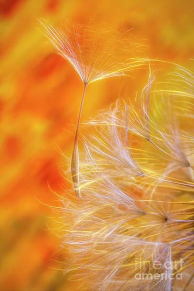 Modern Photograph - Seed by Veikko Suikkanen