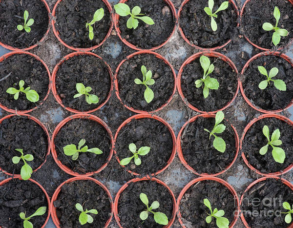 Wall Art - Photograph - Seedlings by Tim Gainey