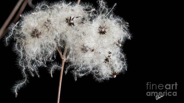 Photograph - Seeds II by Alana Ranney