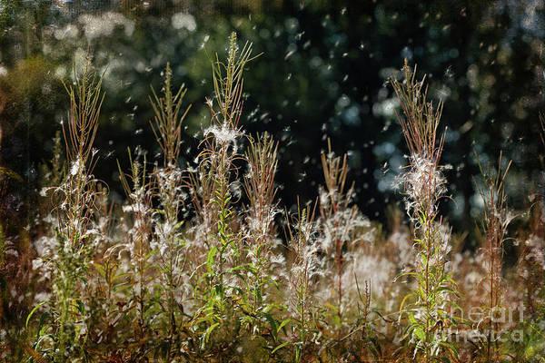 Photograph -  Seeds Of Change by Liz Alderdice