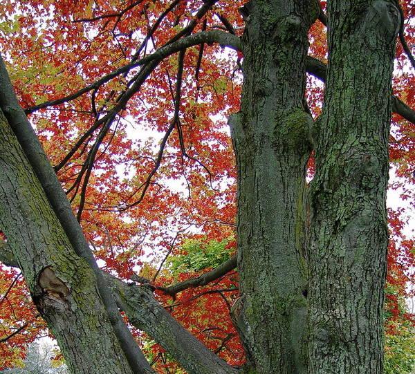 Seeing Autumn Art Print