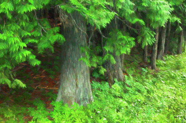 Wall Art - Photograph - Seeing Cedars Glacier National Park 101 by Rich Franco