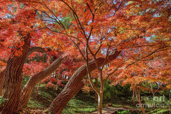 Photograph - Seeing Red by Paul Quinn