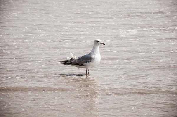 Photograph - Segul Standing In Water by Dan Urban