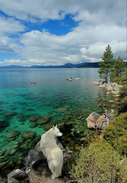 Photograph - Sekani Lake Tahoe Water Protector Portrait by Sean Sarsfield