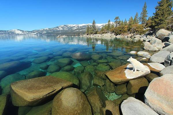 Photograph - Sekani Rocks Lake Tahoe  by Sean Sarsfield
