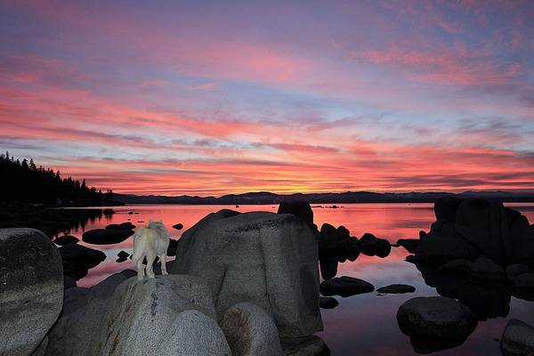 Photograph - Sekani Twilight On The Rocks by Sean Sarsfield