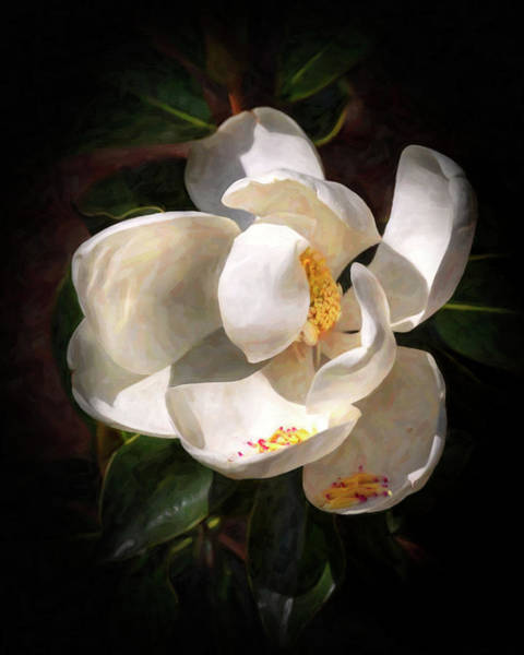 Photograph - Seminary Magnolia In Oils by Harriet Feagin