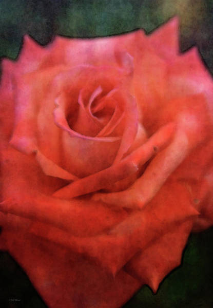 Photograph - Sensual 4688 Idp_2 by Steven Ward