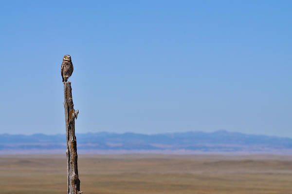 Photograph - Sentinel by Carl Young
