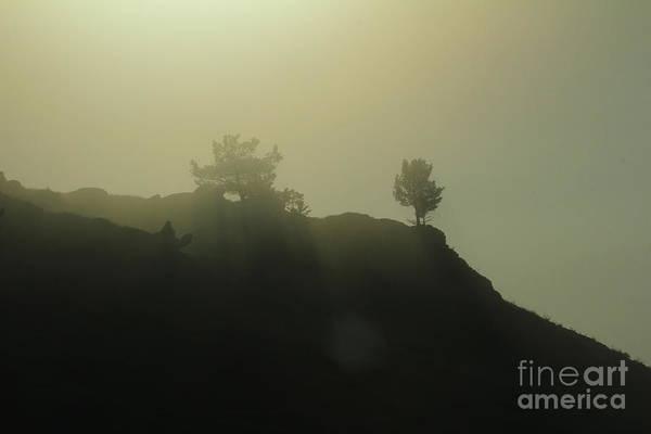 Photograph - Sentinels by Ann E Robson