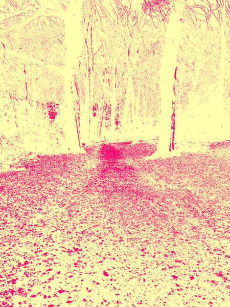 Photograph - Sepia Forest Trees In Highgate Woods 53 by Artist Dot