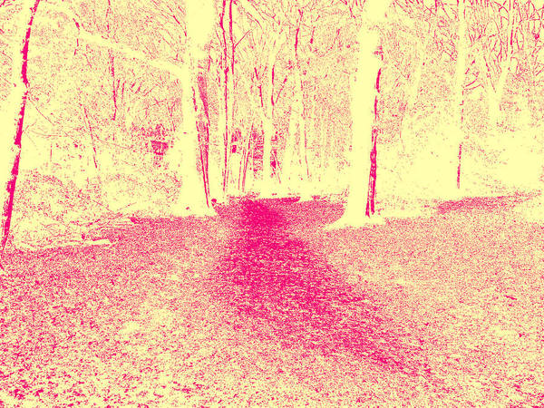 Photograph - Sepia Forest Trees In Highgate Woods 54 by Artist Dot