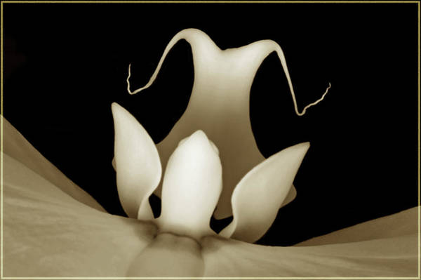 Wall Art - Photograph - Sepia Orchid Macro Abstract by Terence Davis