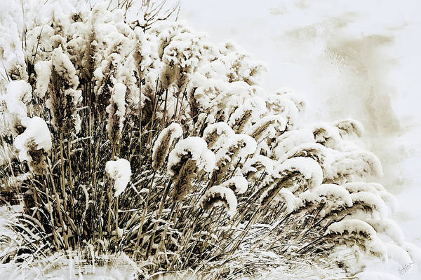 Digital Art - Sepia Snow by Rick Lawler