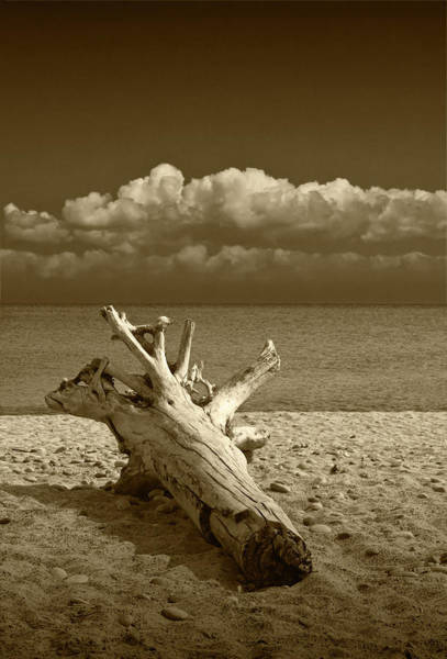 Photograph - Sepia Tone Of Driftwood On The Beach At Whitefish Point In Michigan's Upper Peninsula by Randall Nyhof