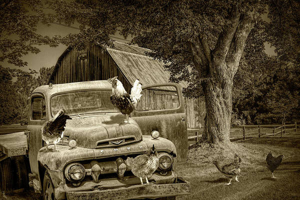 Photograph - Sepia Tone Of Old Vintage Ford Truck With Free Range Chickens by Randall Nyhof