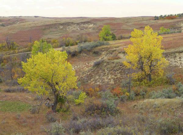 Photograph - September Trees Reverie by Cris Fulton