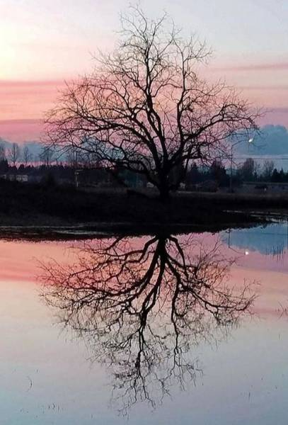 Photograph - Serenity At Sunset by Suzy Piatt