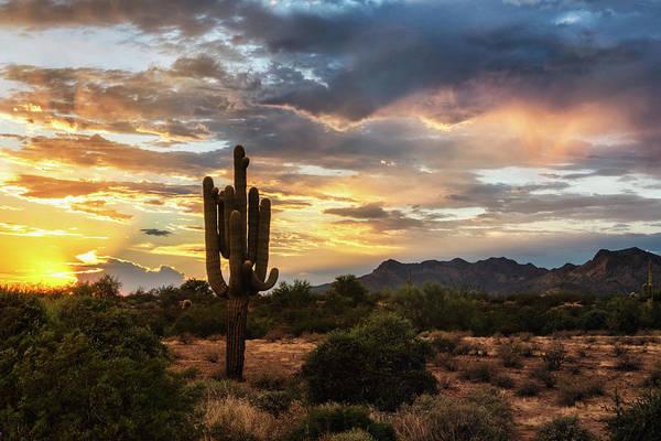 Wall Art - Photograph - Serenity On A Sonoran Evening  by Saija Lehtonen