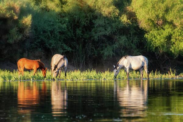 Wall Art - Photograph - Serenity On The River  by Saija Lehtonen
