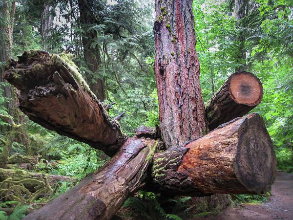 Photograph - Series Of Logs No. 2 by Juan Contreras