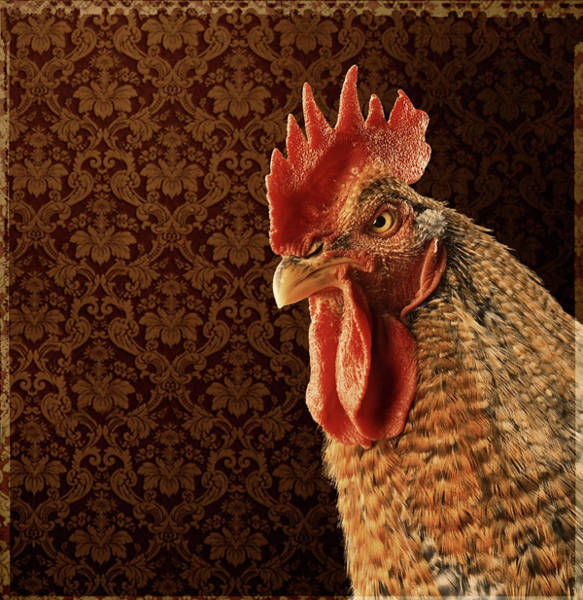 Rooster Photograph - Serious Rooster by Siqui Sanchez