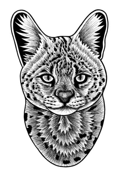 African Animal Drawing - Serval Cat - In Illustration by Loren Dowding