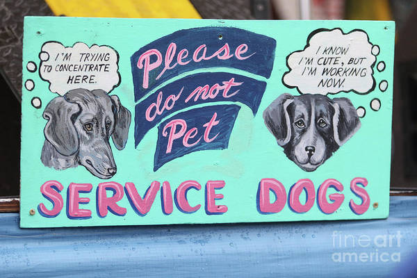 Service Dog Photograph - Service Dogs Sign by Concert Photos