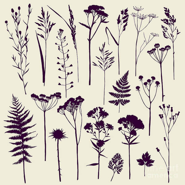 Herbal Wall Art - Digital Art - Set Of Illustrations Of Plants by Xenia ok