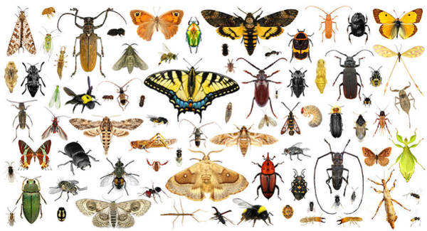 Collage Wall Art - Photograph - Set Of Insects On A White Background by Protasov An
