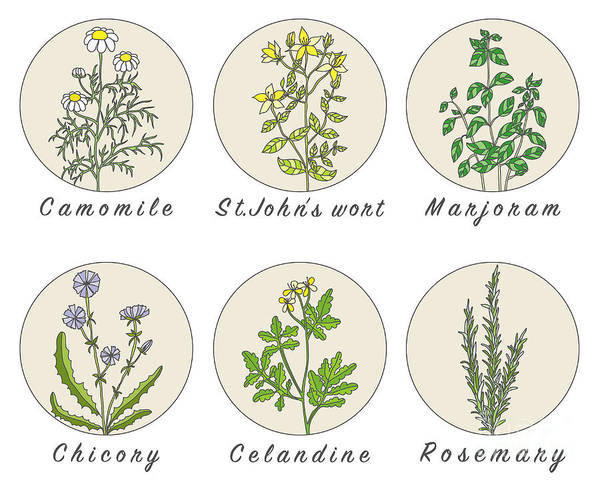 Organic Garden Wall Art - Digital Art - Set Of Spices, Medicinal Herbs And by Happiest Sima