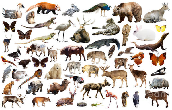Zoology Wall Art - Photograph - Set Of Various Asian Isolated Wild by Iakov Filimonov
