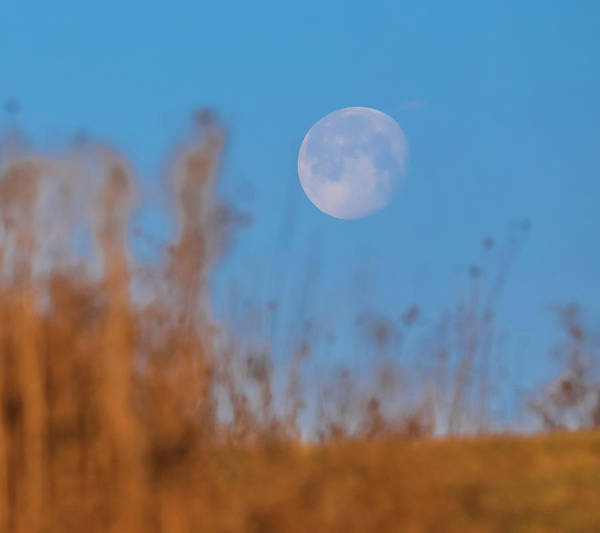 Photograph - Setting Snow Moon by Dan Sproul