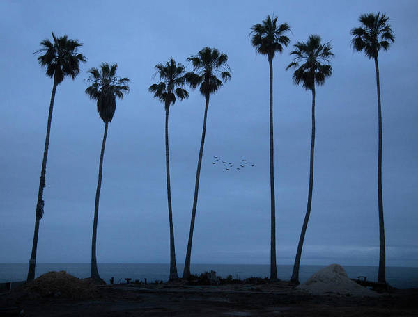 Photograph - Seven Palms At Dawn by John Rodrigues