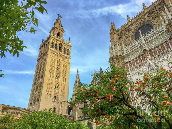 Wall Art - Photograph - Seville Cathedral by Delphimages Photo Creations