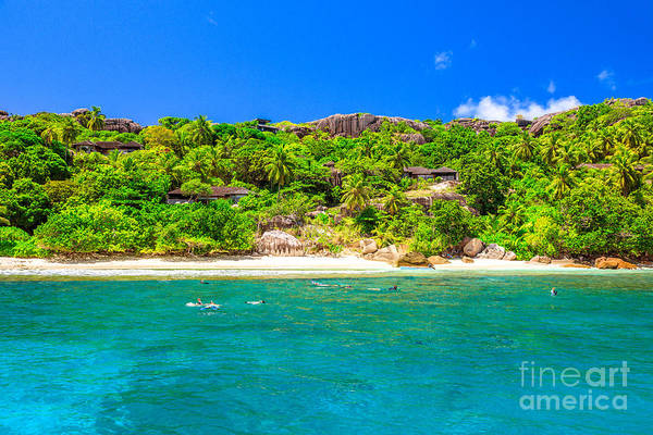 Photograph - Seychelles Island Snorkeling by Benny Marty