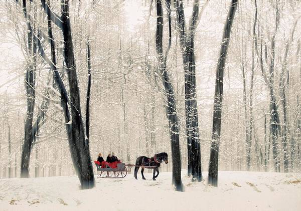 Wall Art - Photograph - Winter Sleigh Ride by Jessica Jenney