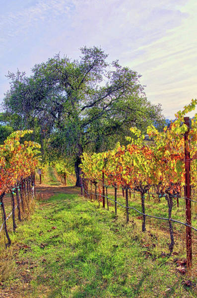 Camera Raw Photograph - Shade For Man Sun For Vines by Brenton Cooper