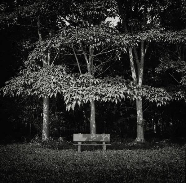 Photograph - Shade by Trinidad Dreamscape