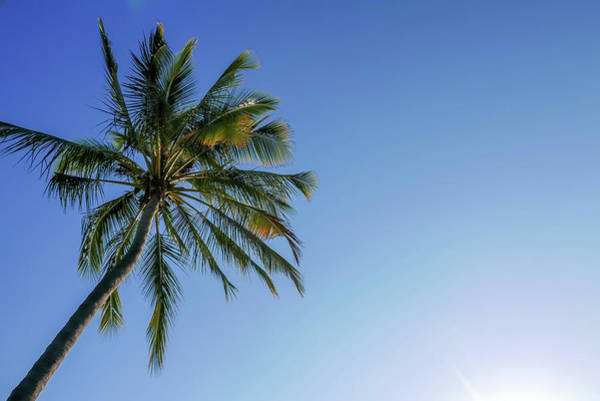 Shades Of Blue And A Palm Tree Art Print
