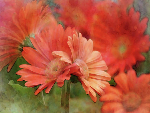 Photograph - Shades Of Orange 6398 Idp_2 by Steven Ward