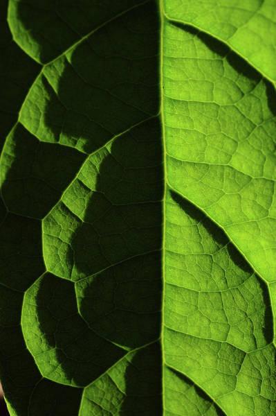 Photograph - Shadow And Light. Green Leaf Macro by Jenny Rainbow