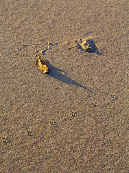 Photograph - Shadow And Tracks by Robert Potts